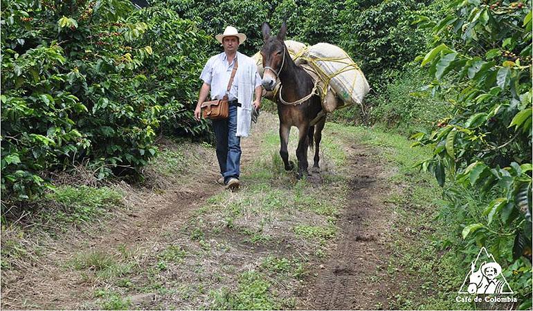 COLOMBIA – HỨNG KHỞI CỦA CÀ PHÊ ĐẶC BIỆT – Phần 2
